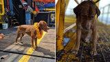 Pies pływał ponad 220 kilometrów od brzegu