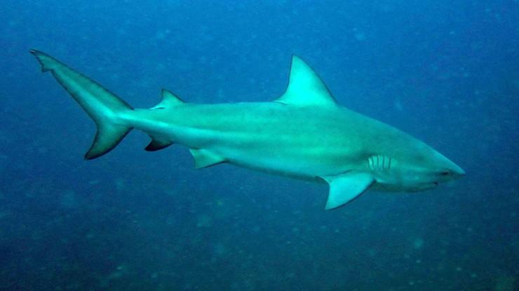 Atak rekina. Kobieta w ciąży uratowała męża