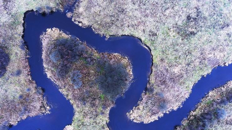 Chcą zmienić bieg Narewki, by zatrzymać więcej wody w Puszczy Białowieskiej