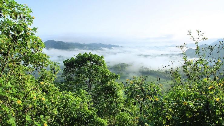Katastrofalne skutki pożarów lasów Amazonii