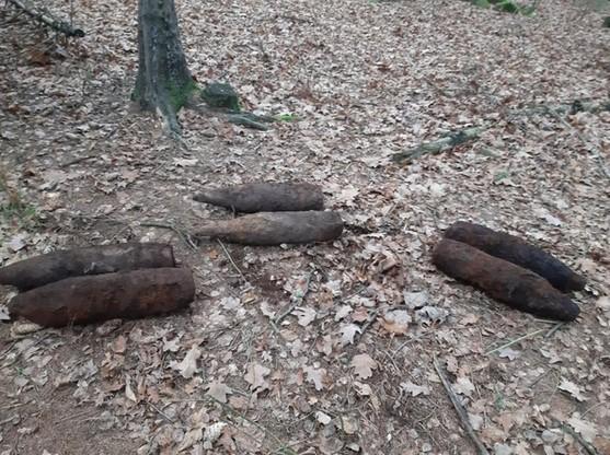 Niebezpieczne odkrycie w Nadleśnictwie Hajnówka