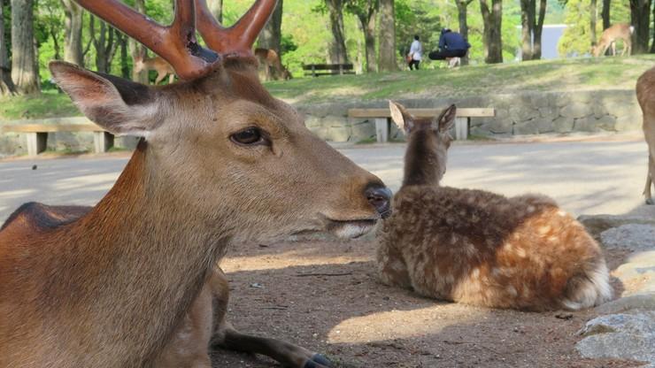 Wymyślił jadalną alternatywę dla plastikowych torebek. Wszystko, by chronić jelenie