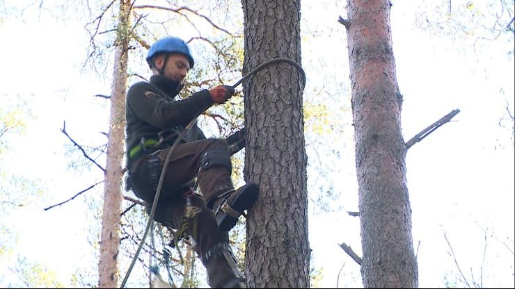 Szyszkarze jak taternicy. Dzięki ich pracy wyrośnie nowe pokolenie lasu