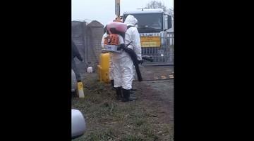 Ptasia grypa koło Łodzi. Zagazowano 40 tys. kaczek