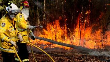 """Setki misiów koala zagrożone przez pożary lasów w Australii. """"To tragedia narodowa"""""""