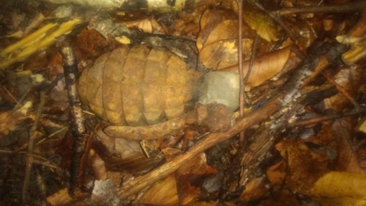 Zbierał grzyby w lesie, natrafił na granat