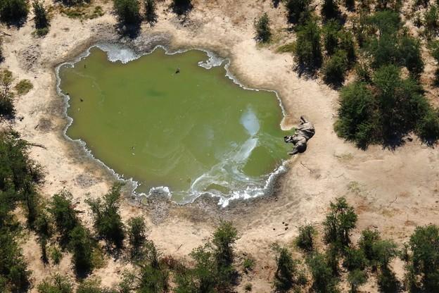 Padły z nieznanych przyczyn słoń w Botswanie