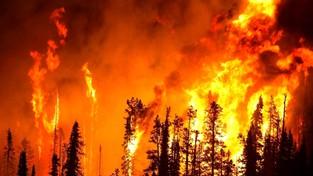 03.12.2019 07:00 Leonardo DiCaprio oskarżony o finansowanie osób, które wywołują pożary lasów w Amazonii