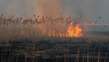 Pożar w Biebrzańskim Parku Narodowym. Pomagają drony wykorzystywane w Czarnobylu