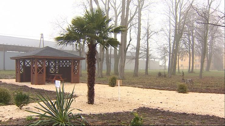 Wycięli drzewa i zasadzili... palmę. Tłumaczą, że chcieli przypomnieć o zmianach klimatu