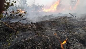Syberia w ogniu. Spłonęło już ponad 300 tys. hektarów lasu