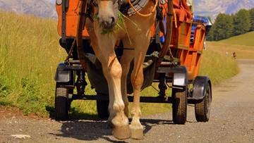 """""""Mój koń jest trzeźwy i zna drogę do domu"""" - tłumaczył policji nietrzeźwy woźnica"""