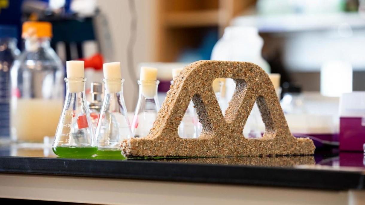 Od teraz cegły budują dla nas… bakterie. NASA chce je wysłać nawet na Marsa