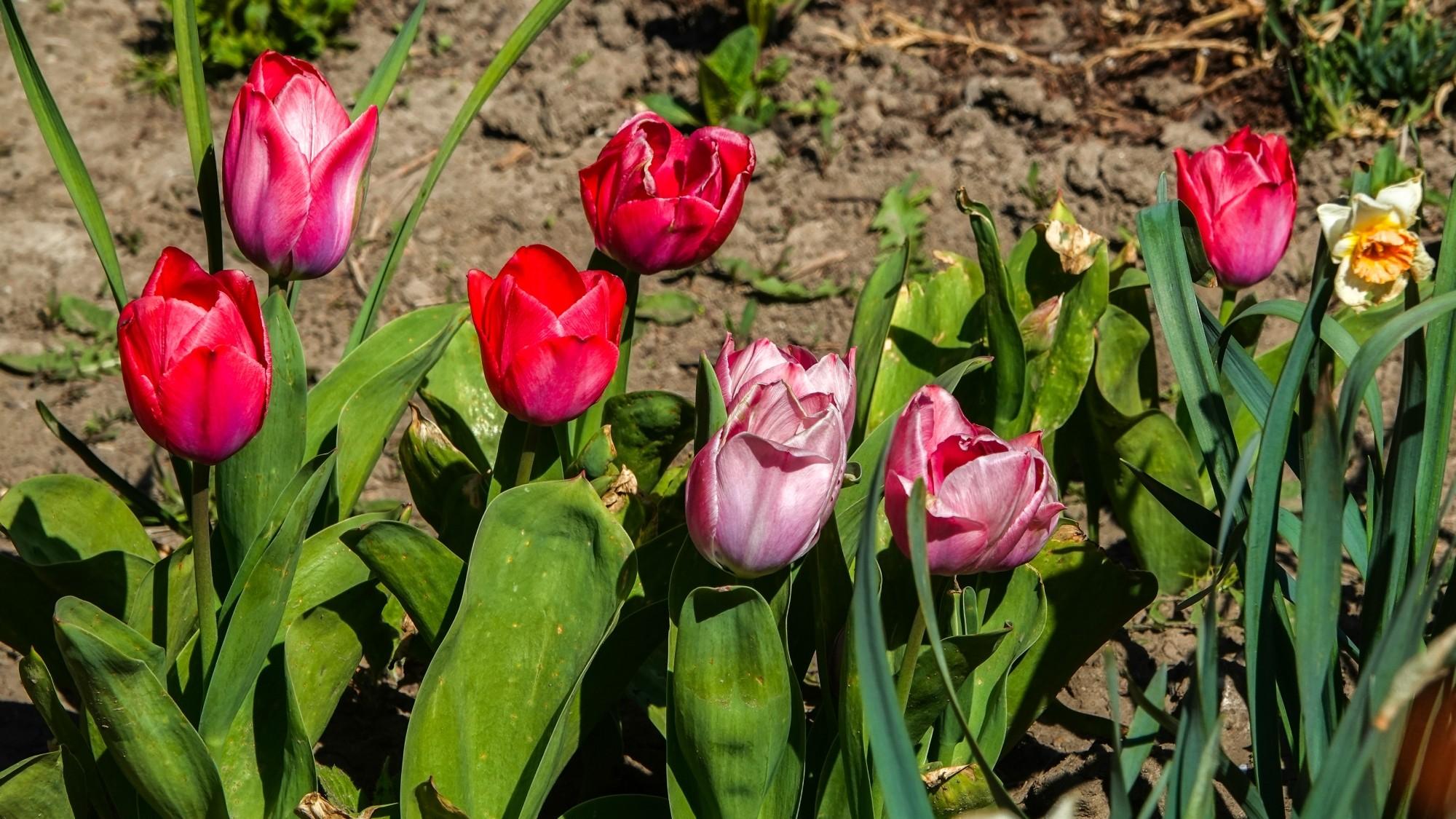 Kwitnąca wiosna - zdjęcie 2
