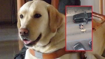 Siłą wyciągnął niewidomą z auta, zostawił ją na środku drogi. Bo wsiadła z psem przewodnikiem