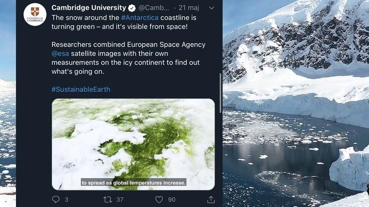 """""""Zielony śnieg"""" na Antarktydzie. Brytyjscy naukowcy poznali przyczynę tego zjawiska"""