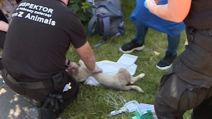 Martwe psy w schronisku w Radysach. Jest decyzja ws. aresztu dla właściciela