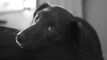 Pijana matka zabiła psa na oczach dzieci