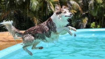 W Budapeszcie otwarto pierwszy ośrodek wellness dla psów