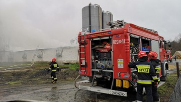 6 tysięcy indyków spłonęło żywcem. Pożar kurnika na Dolnym Śląsku [ZDJĘCIA]