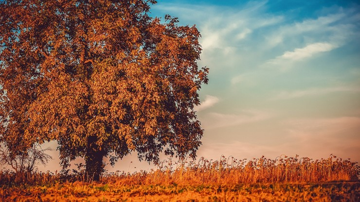 Listopad przywita większość Polski słońcem. Sprawdź prognozę pogody