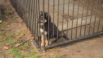 """Schronisko dla zwierząt wstrzymało adopcje szczeniąt. """"Pies to nie prezent"""""""