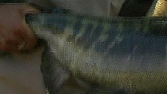 Taaaka Ryba - Odcinek 6