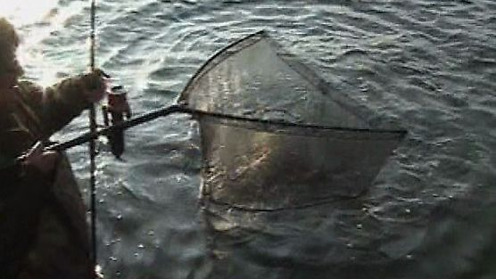 Taaaka Ryba - Odcinek 15