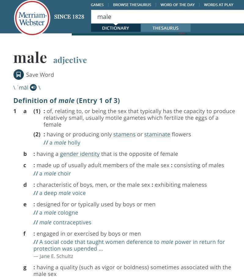 """Objaśnienia przymiotnika """"male"""" w amerykańskim słowniku"""