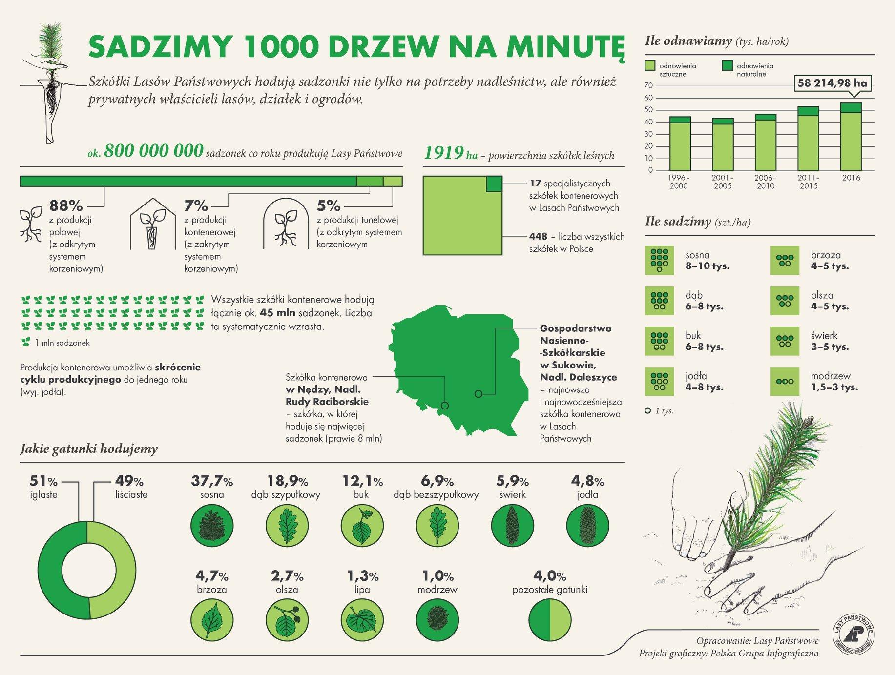Sadzimy 1000 drzew na minutę - Lasy Państwowe